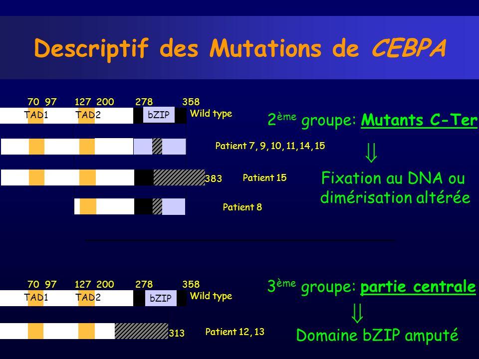 Descriptif des Mutations de CEBPA 70 97 127 200 278 358 Wild type Patient 12, 13 313 TAD1TAD2 bZIP Patient 7, 9, 10, 11, 14, 15 70 97 127 200 278 358