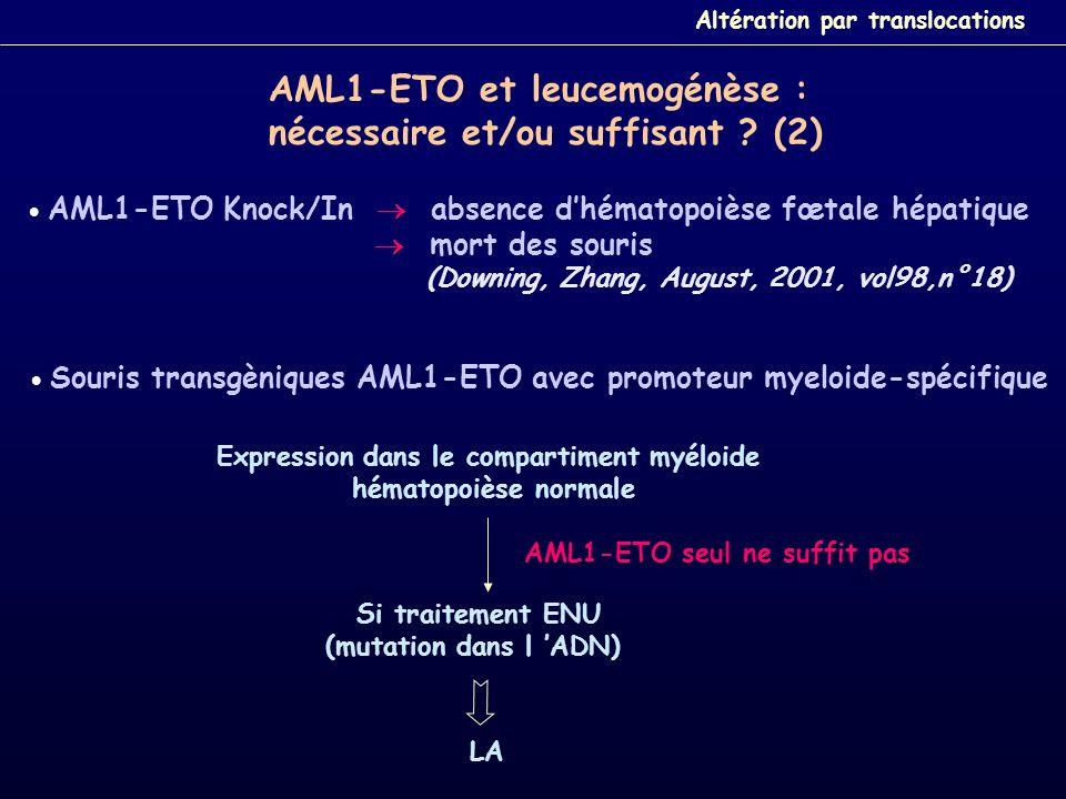 AML1-ETO Knock/In absence dhématopoièse fœtale hépatique mort des souris (Downing, Zhang, August, 2001, vol98,n°18) Souris transgèniques AML1-ETO avec