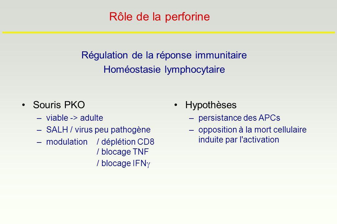 Régulation de la réponse immunitaire Homéostasie lymphocytaire Hypothèses –persistance des APCs –opposition à la mort cellulaire induite par l'activat