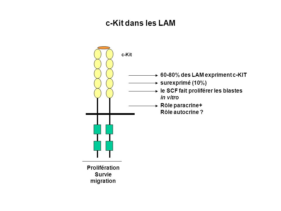 c-Kit c-Kit dans les LAM Prolifération Survie migration 60-80% des LAM expriment c-KIT le SCF fait proliférer les blastes in vitro Rôle paracrine+ Rôl