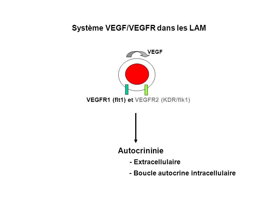 Autocrininie - Extracellulaire - Boucle autocrine intracellulaire Système VEGF/VEGFR dans les LAM VEGF VEGFR1 (flt1) et VEGFR2 (KDR/flk1)