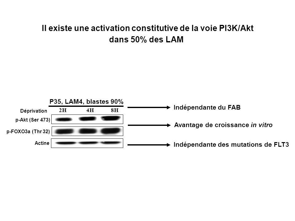 Il existe une activation constitutive de la voie PI3K/Akt dans 50% des LAM Déprivation 2H 4H 8H P35, LAM4, blastes 90% p-Akt (Ser 473) p-FOXO3a (Thr 32) Actine Indépendante du FAB Indépendante des mutations de FLT3 Avantage de croissance in vitro