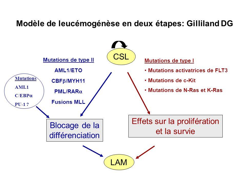 LAM Modèle de leucémogénèse en deux étapes: Gilliland DG Mutations de type I Mutations activatrices de FLT3 Mutations de c-Kit Mutations de N-Ras et K-Ras Effets sur la prolifération et la survie Mutations AML1 C/EBP PU-1 .