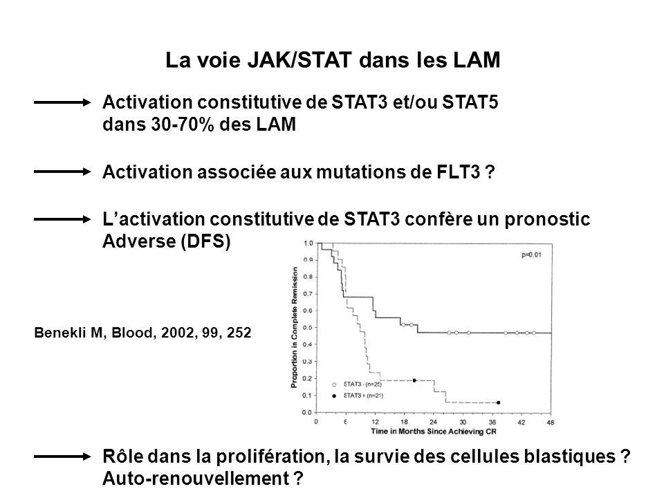 La voie JAK/STAT dans les LAM Activation constitutive de STAT3 et/ou STAT5 dans 30-70% des LAM Activation associée aux mutations de FLT3 .