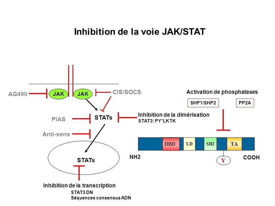 Inhibition de la voie JAK/STAT STATs JAK AG490 CIS/SOCS PIAS NH2 COOH SH2 DBD TA Y LD Inhibition de la dimérisation STAT3: PY*LKTK Activation de phosphatases SHP1/SHP2PP2A Anti-sens Inhibition de la transcription STAT3 DN Séquences consensus ADN