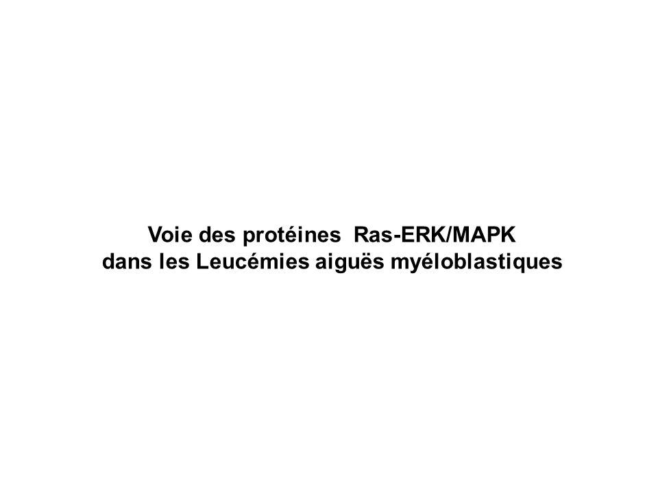 Voie des protéines Ras-ERK/MAPK dans les Leucémies aiguës myéloblastiques