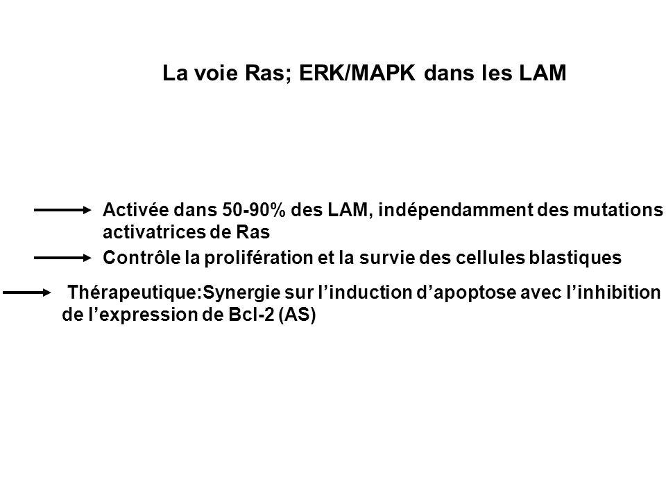 La voie Ras; ERK/MAPK dans les LAM Activée dans 50-90% des LAM, indépendamment des mutations activatrices de Ras Contrôle la prolifération et la survi