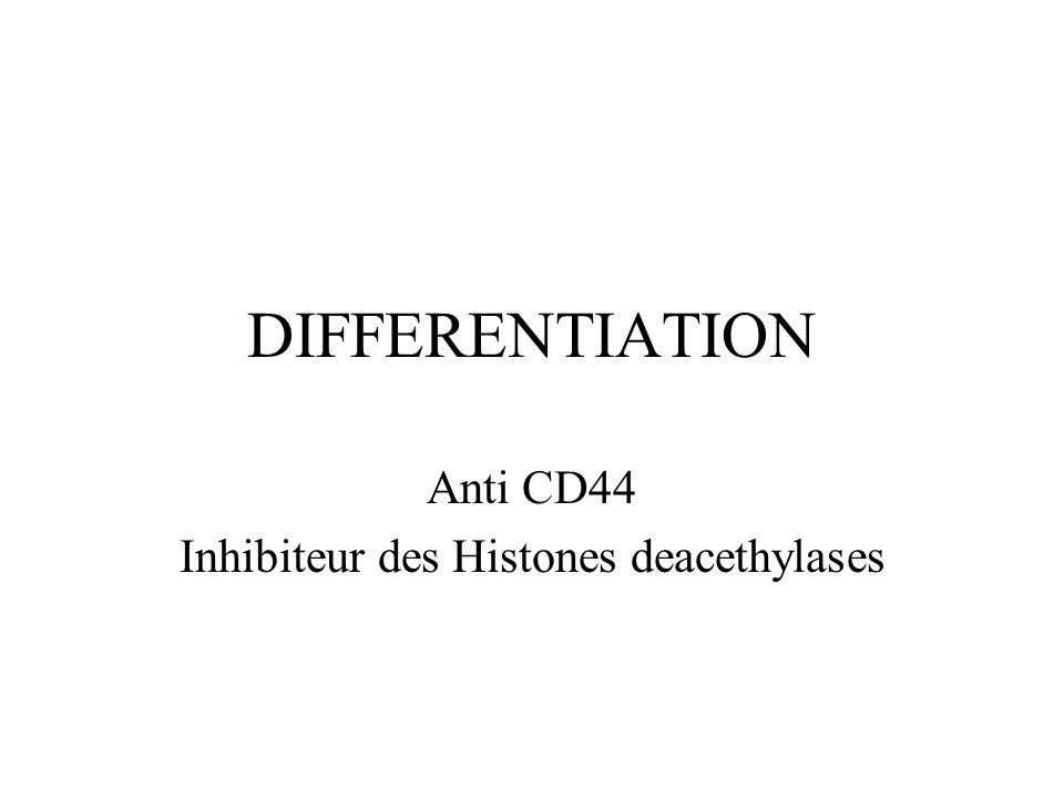 DIFFERENTIATION Anti CD44 Inhibiteur des Histones deacethylases