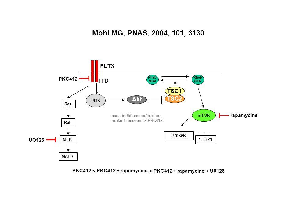 FLT3 PI3K Akt TSC2 TSC1 Rheb GTP Rheb GDP mTOR P70S6K 4E-BP1 ITD Ras Raf MEK MAPK PKC412 Mohi MG, PNAS, 2004, 101, 3130 sensibilité restaurée dun mutant résistant à PKC412 rapamycine < PKC412 + rapamycine UO126 < PKC412 + rapamycine + U0126