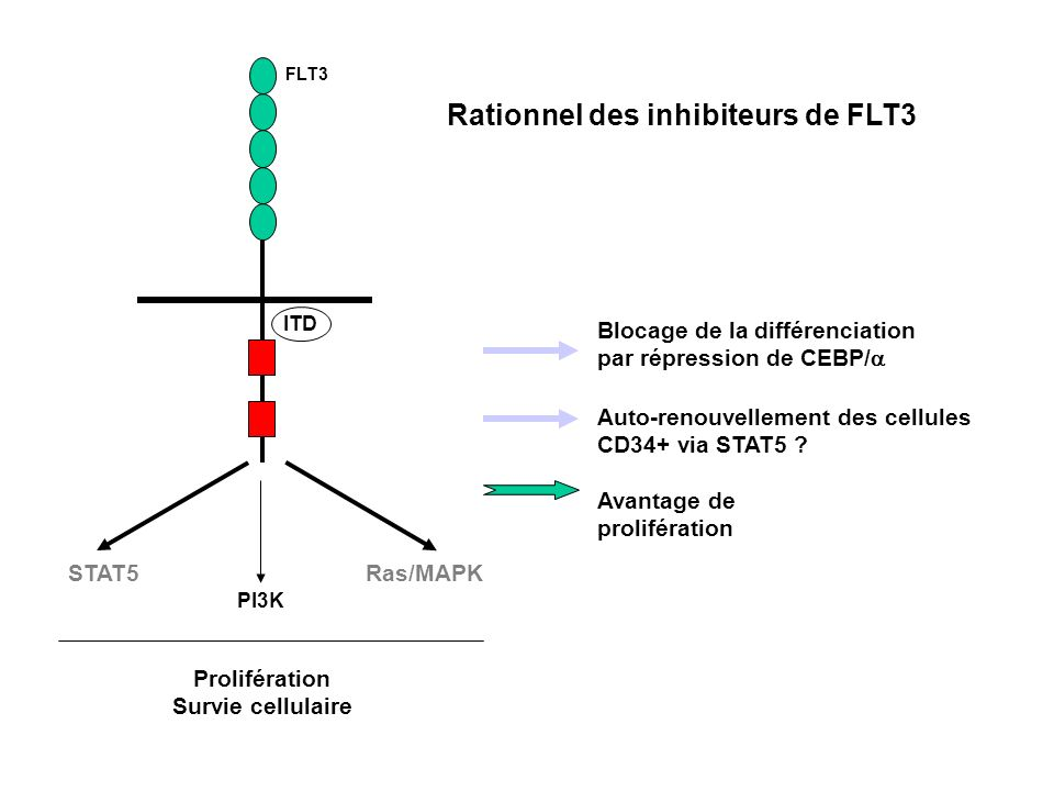 FLT3 ITD Ras/MAPKSTAT5 PI3K Blocage de la différenciation par répression de CEBP/ Auto-renouvellement des cellules CD34+ via STAT5 ? Prolifération Sur