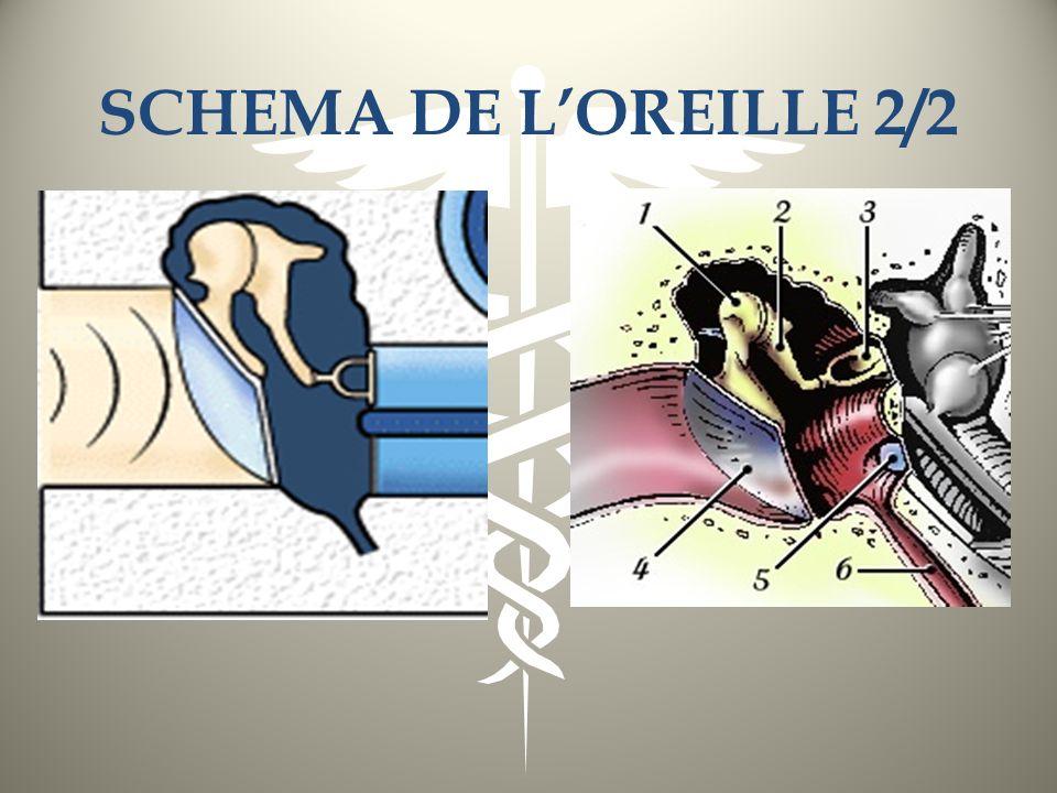 SCHEMA DE LOREILLE 2/2