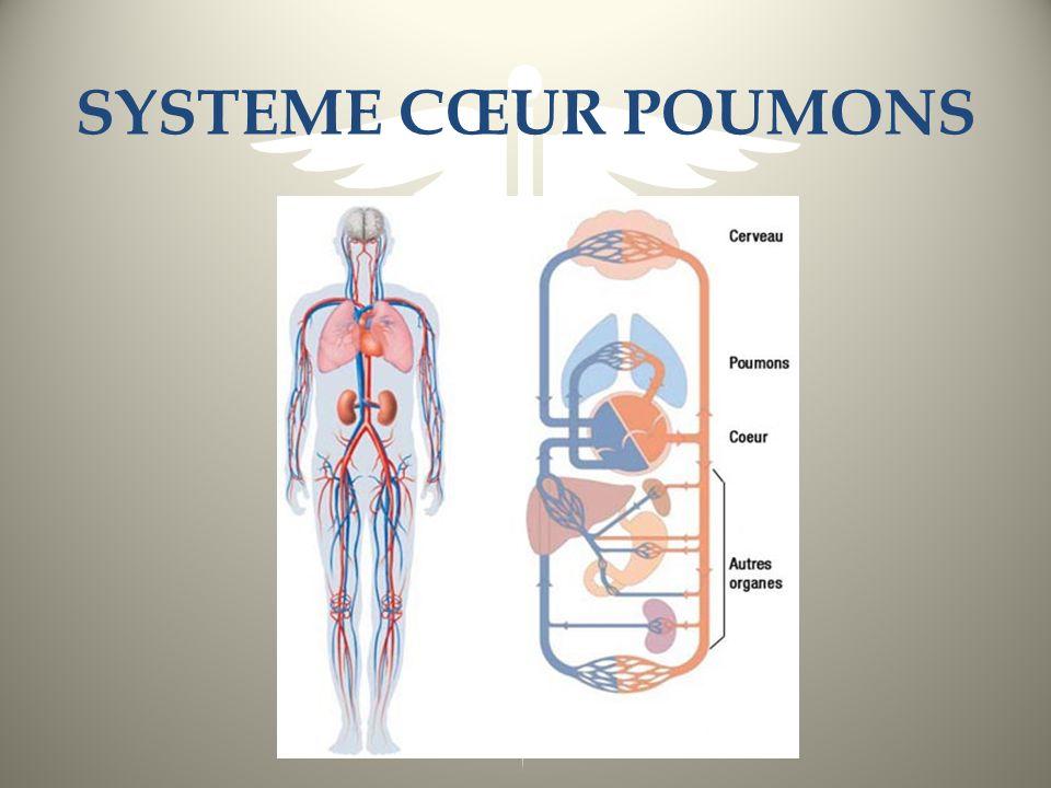 SYSTEME CŒUR POUMONS