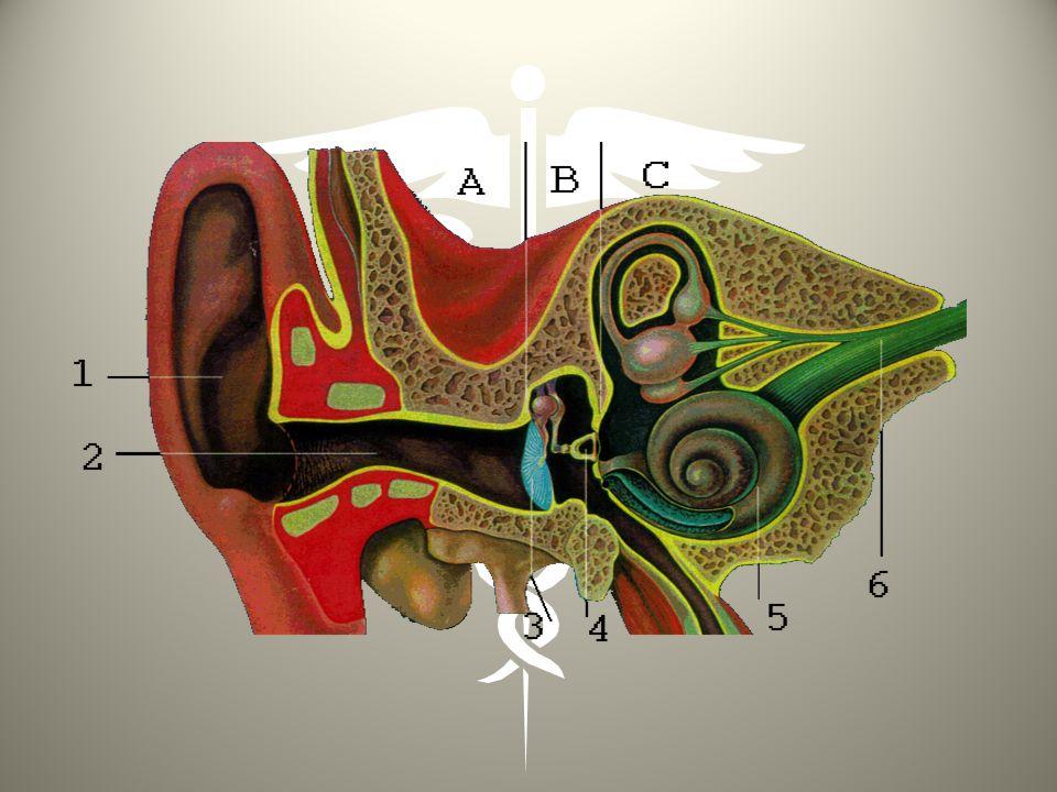 BAROTRAUMATISME DES SINUS DE LA FACE 2/2 CAUSES: idem oreilles avec existence dune pathologie inflammatoire ou infectieuse en cours obstruant lostium du sinus.
