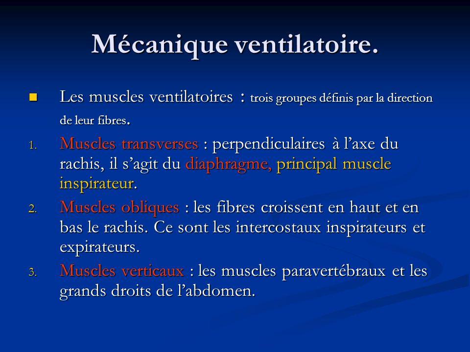 Mécanique ventilatoire. Les muscles ventilatoires : trois groupes définis par la direction de leur fibres. Les muscles ventilatoires : trois groupes d