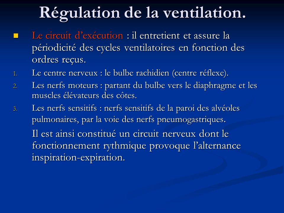 Régulation de la ventilation. Le circuit dexécution : il entretient et assure la périodicité des cycles ventilatoires en fonction des ordres reçus. Le