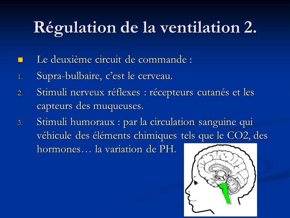 Régulation de la ventilation 2. Le deuxième circuit de commande : Le deuxième circuit de commande : 1. Supra-bulbaire, cest le cerveau. 2. Stimuli ner