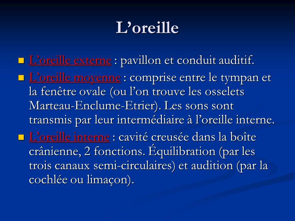 Loreille Loreille externe : pavillon et conduit auditif. Loreille externe : pavillon et conduit auditif. Loreille moyenne : comprise entre le tympan e