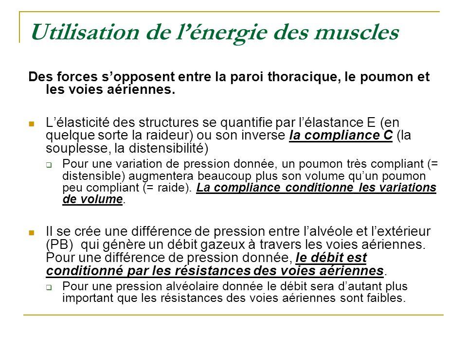 Utilisation de lénergie des muscles Des forces sopposent entre la paroi thoracique, le poumon et les voies aériennes. Lélasticité des structures se qu