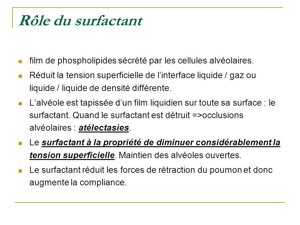 Rôle du surfactant film de phospholipides sécrété par les cellules alvéolaires. Réduit la tension superficielle de linterface liquide / gaz ou liquide