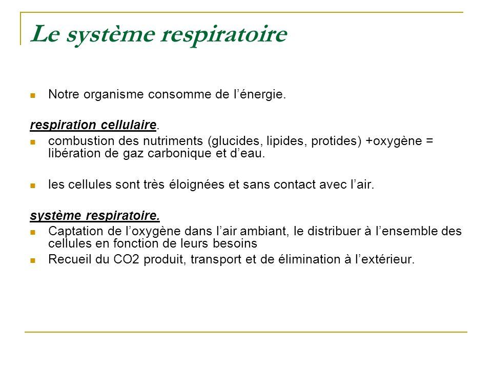 Le système respiratoire Notre organisme consomme de lénergie. respiration cellulaire. combustion des nutriments (glucides, lipides, protides) +oxygène