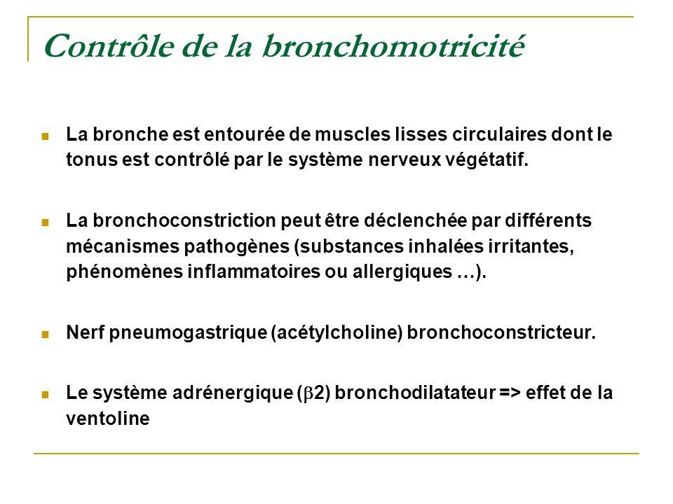 Contrôle de la bronchomotricité La bronche est entourée de muscles lisses circulaires dont le tonus est contrôlé par le système nerveux végétatif. La