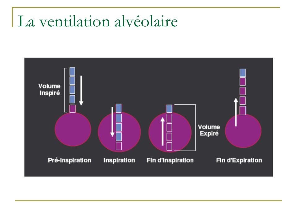 La ventilation alvéolaire
