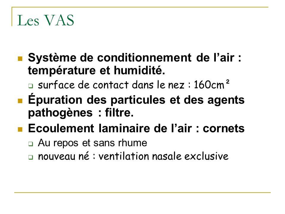 Les VAS Système de conditionnement de lair : température et humidité. surface de contact dans le nez : 160cm² Épuration des particules et des agents p