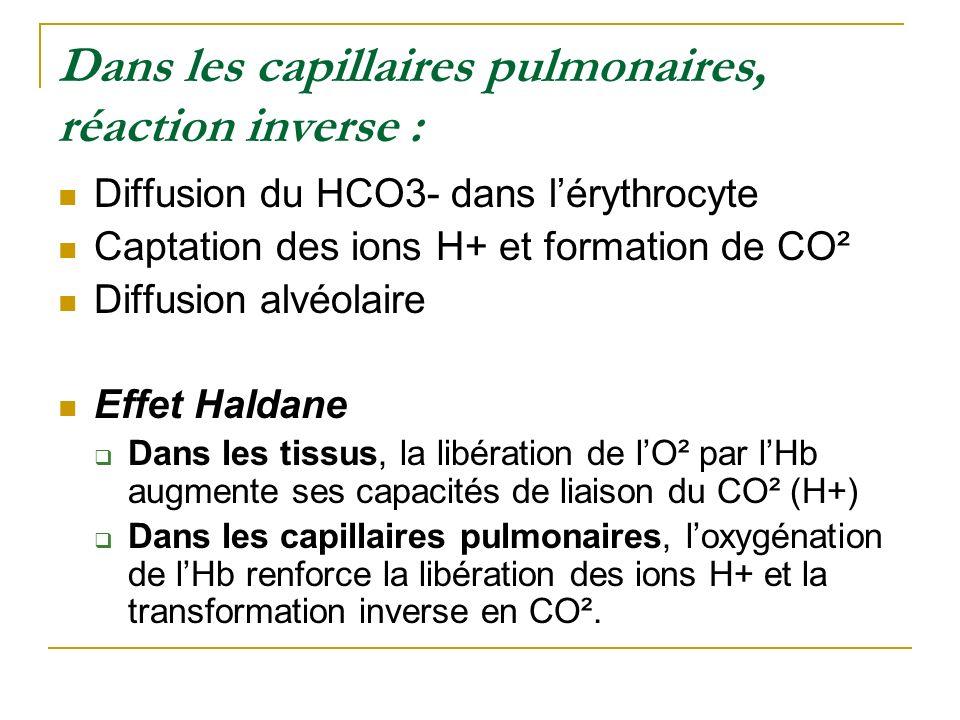 Dans les capillaires pulmonaires, réaction inverse : Diffusion du HCO3- dans lérythrocyte Captation des ions H+ et formation de CO² Diffusion alvéolai