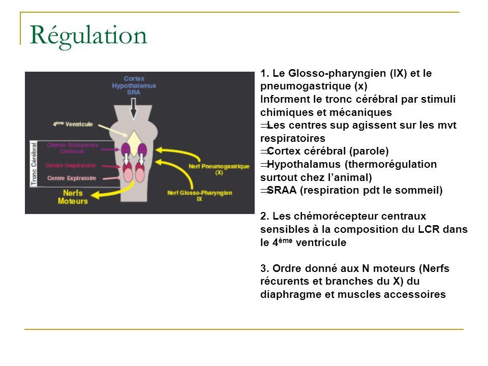 Régulation 1. Le Glosso-pharyngien (IX) et le pneumogastrique (x) Informent le tronc cérébral par stimuli chimiques et mécaniques Les centres sup agis