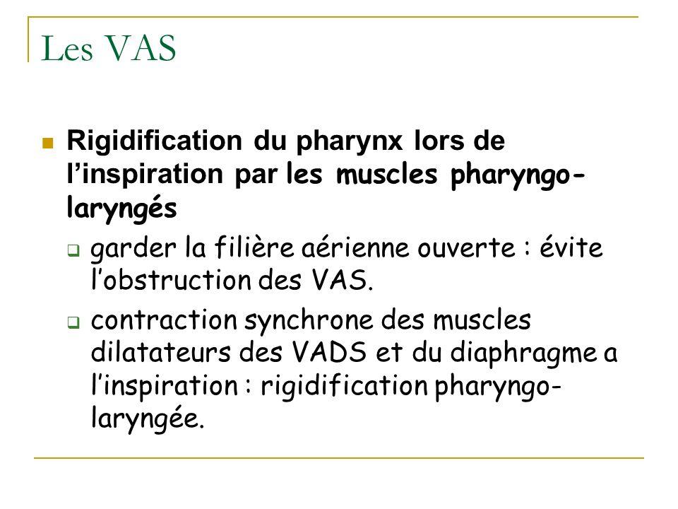 Les VAS Rigidification du pharynx lors de linspiration par les muscles pharyngo- laryngés garder la filière aérienne ouverte : évite lobstruction des