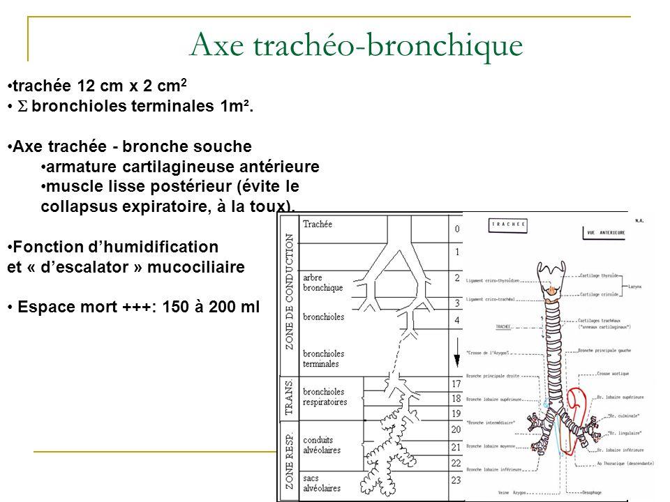 Axe trachéo-bronchique trachée 12 cm x 2 cm 2 bronchioles terminales 1m². Axe trachée - bronche souche armature cartilagineuse antérieure muscle lisse