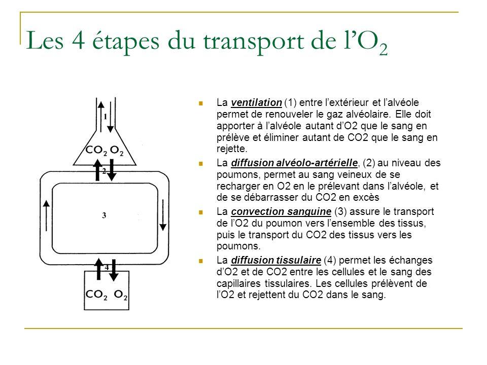 Les 4 étapes du transport de lO 2 La ventilation (1) entre lextérieur et lalvéole permet de renouveler le gaz alvéolaire. Elle doit apporter à lalvéol