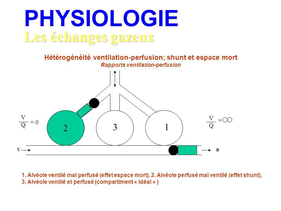 Les échanges gazeux PHYSIOLOGIE Hétérogénéité ventilation-perfusion; shunt et espace mort Rapports ventilation-perfusion 2 V a 31 VQVQ = 0 VQVQ = 1. A