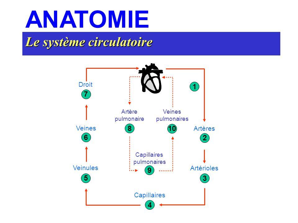 Le système circulatoire ANATOMIE Droit Artère pulmonaire Veines pulmonaires Capillaires pulmonaires Capillaires Artérioles Artères Veinules Veines 7 6