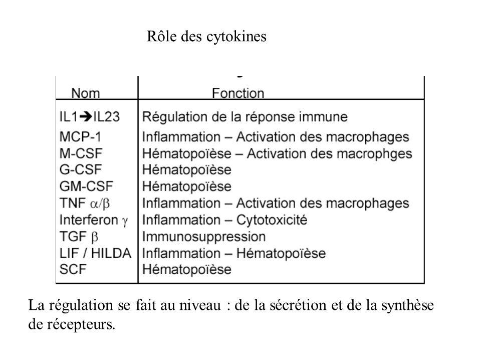 Rôle des cytokines La régulation se fait au niveau : de la sécrétion et de la synthèse de récepteurs.