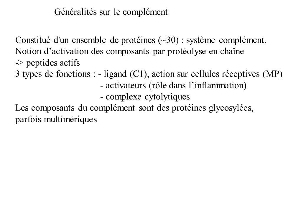 Constitué d'un ensemble de protéines (~30) : système complément. Notion dactivation des composants par protéolyse en chaîne -> peptides actifs 3 types