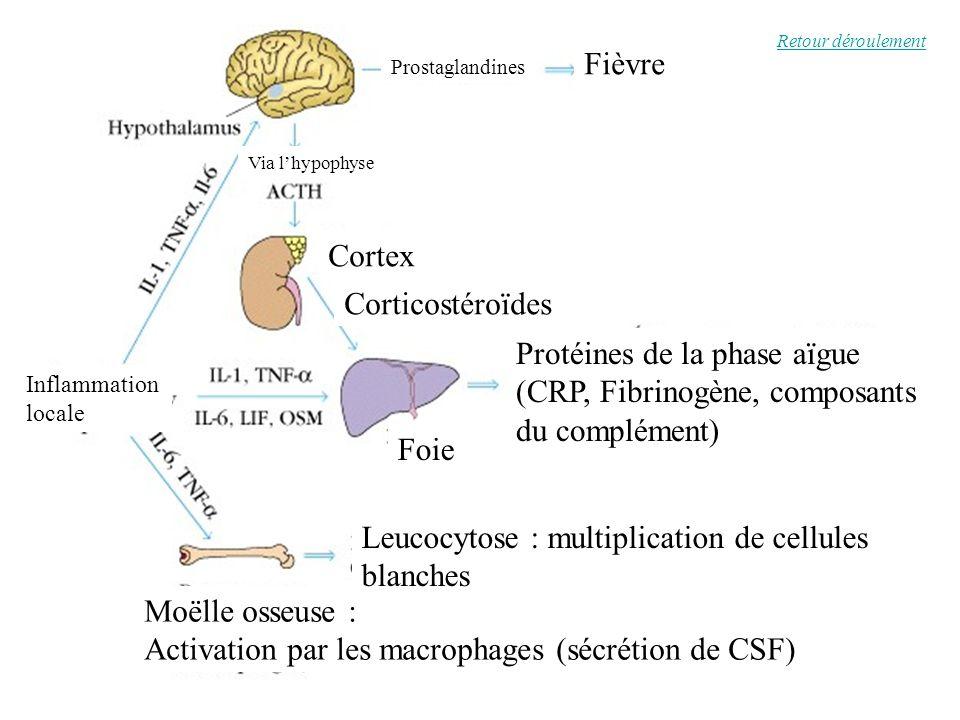 locale Fièvre Prostaglandines Via lhypophyse Cortex Corticostéroïdes Foie Protéines de la phase aïgue (CRP, Fibrinogène, composants du complément) Moë