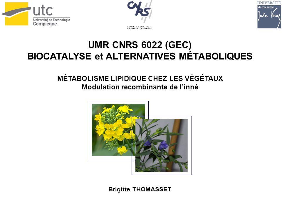 Brigitte THOMASSET UMR CNRS 6022 (GEC) BIOCATALYSE et ALTERNATIVES MÉTABOLIQUES MÉTABOLISME LIPIDIQUE CHEZ LES VÉGÉTAUX Modulation recombinante de linné
