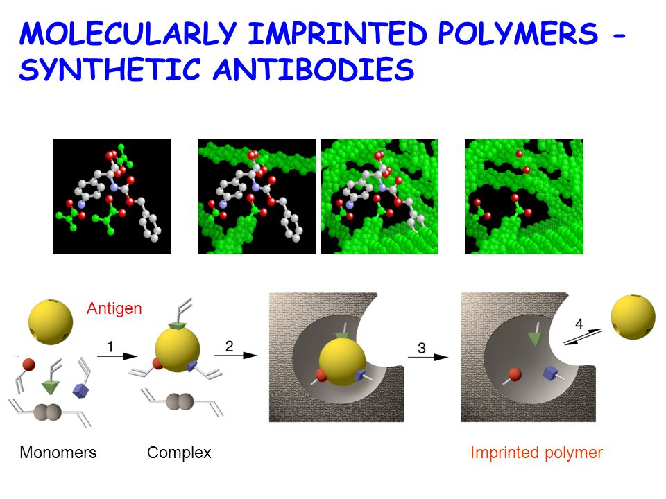 Antigen MonomersComplexImprinted polymer MOLECULARLY IMPRINTED POLYMERS - SYNTHETIC ANTIBODIES