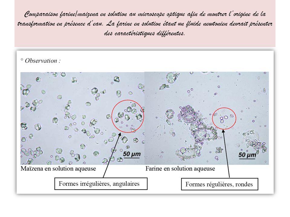 Comparaison farine/maizena en solution au microscope optique afin de montrer lorigine de la transformation en présence deau.