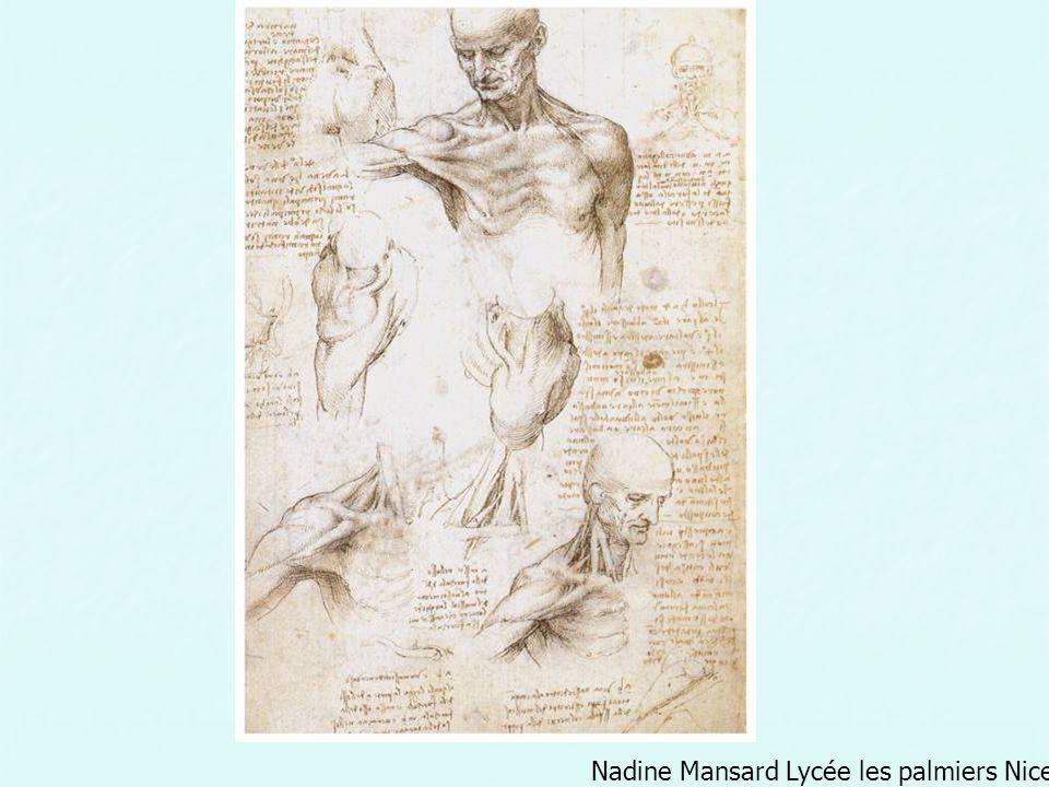 La reproduction de détails anatomiques se limite cependant le plus souvent à la représentation superficielle du corps, de la musculature et de lossature.