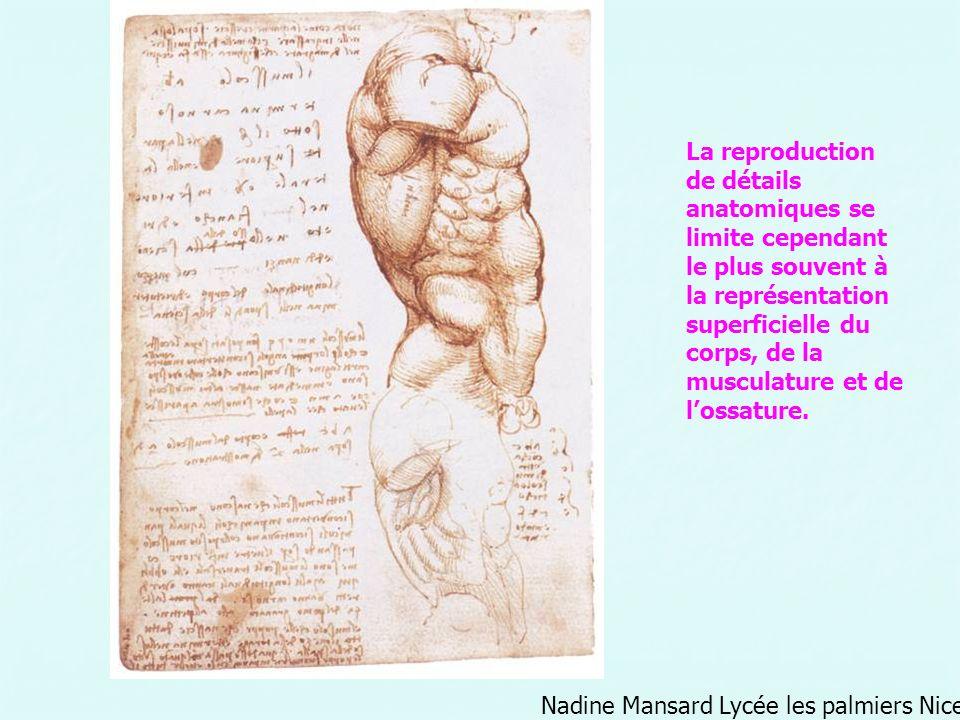 La reproduction de détails anatomiques se limite cependant le plus souvent à la représentation superficielle du corps, de la musculature et de lossatu