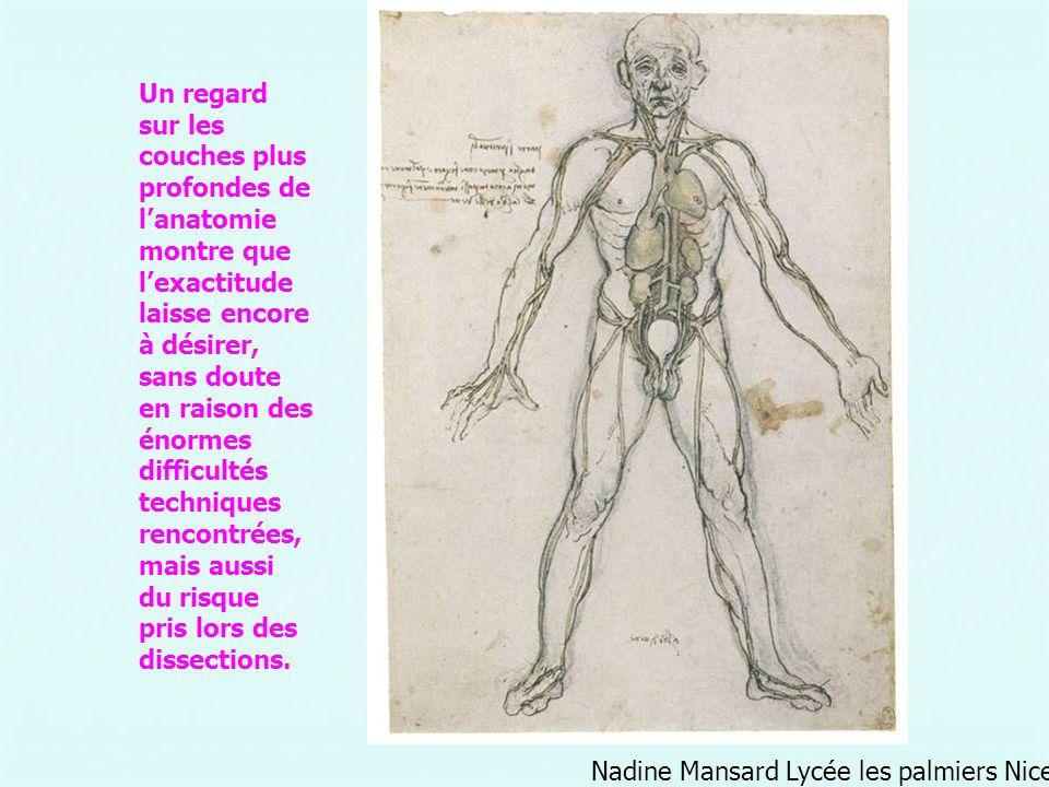 Nadine Mansard Lycée les palmiers Nice Un regard sur les couches plus profondes de lanatomie montre que lexactitude laisse encore à désirer, sans dout