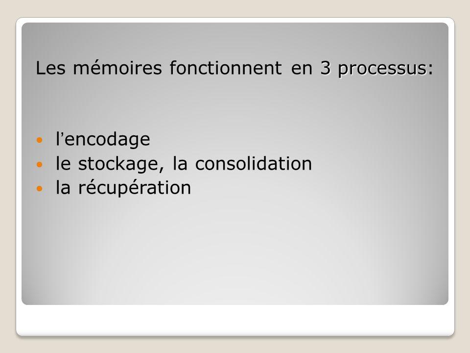 3 processus Les mémoires fonctionnent en 3 processus: lencodage le stockage, la consolidation la récupération
