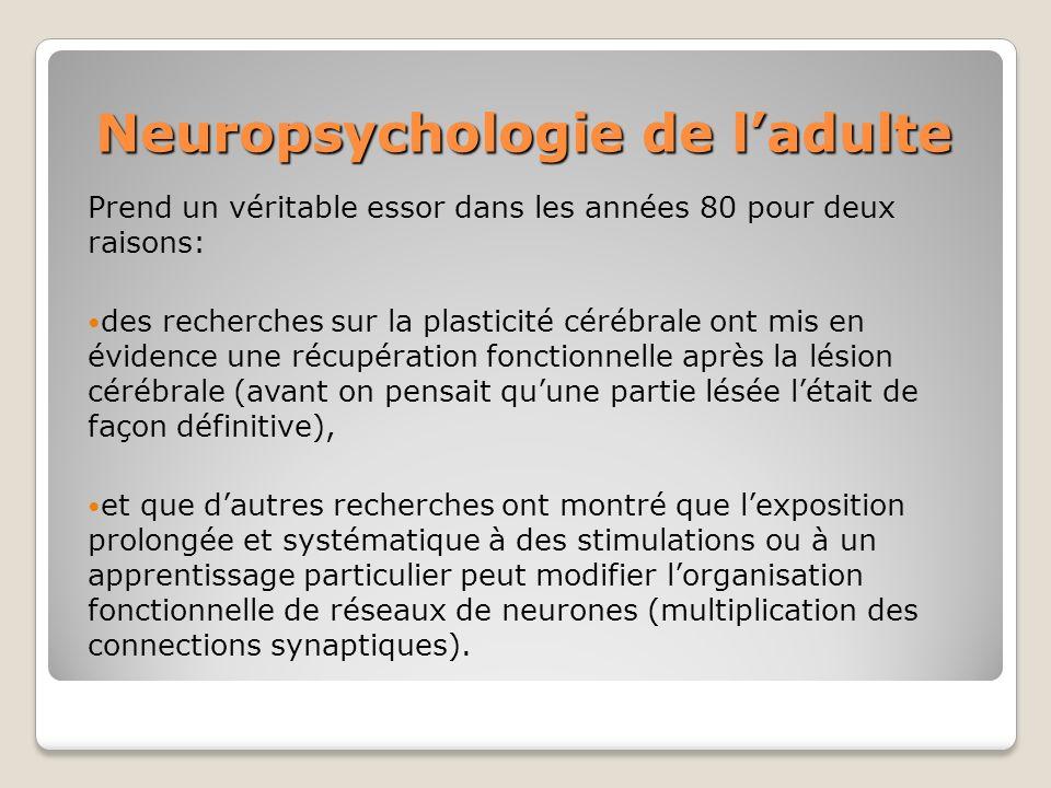 Neuropsychologie de ladulte Prend un véritable essor dans les années 80 pour deux raisons: des recherches sur la plasticité cérébrale ont mis en évide