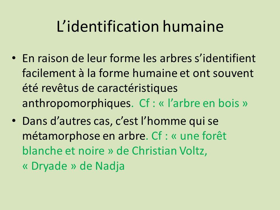 Lidentification humaine En raison de leur forme les arbres sidentifient facilement à la forme humaine et ont souvent été revêtus de caractéristiques a