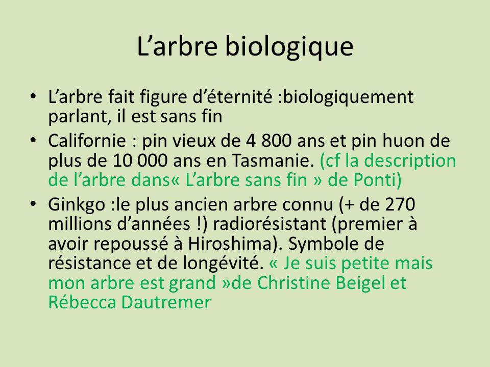 Larbre biologique Larbre fait figure déternité :biologiquement parlant, il est sans fin Californie : pin vieux de 4 800 ans et pin huon de plus de 10