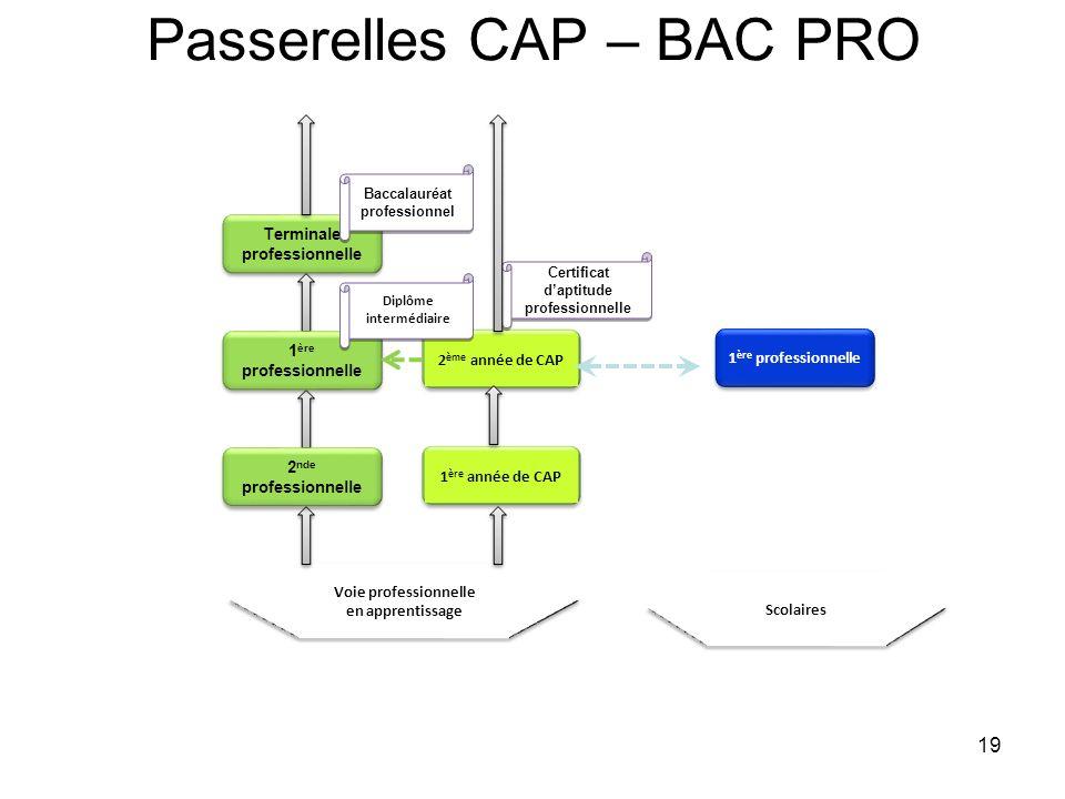 19 Passerelles CAP – BAC PRO Voie professionnelle en apprentissage 1 ère année de CAP 1 ère professionnelle 2 ème année de CAP Terminale professionnel