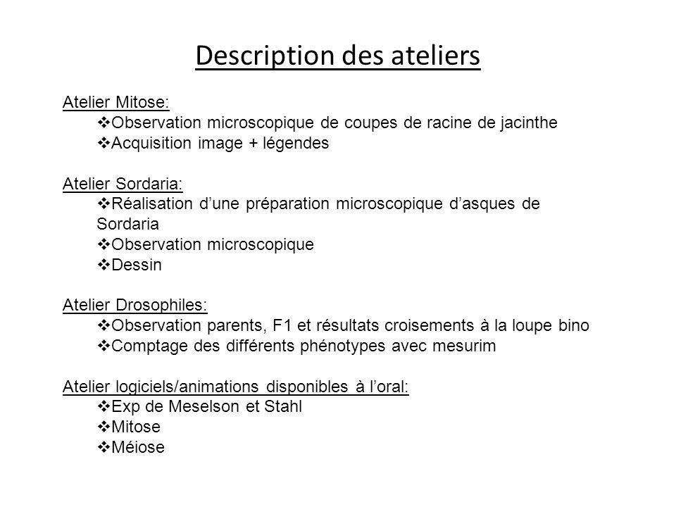 Description des ateliers Atelier Mitose: Observation microscopique de coupes de racine de jacinthe Acquisition image + légendes Atelier Sordaria: Réal