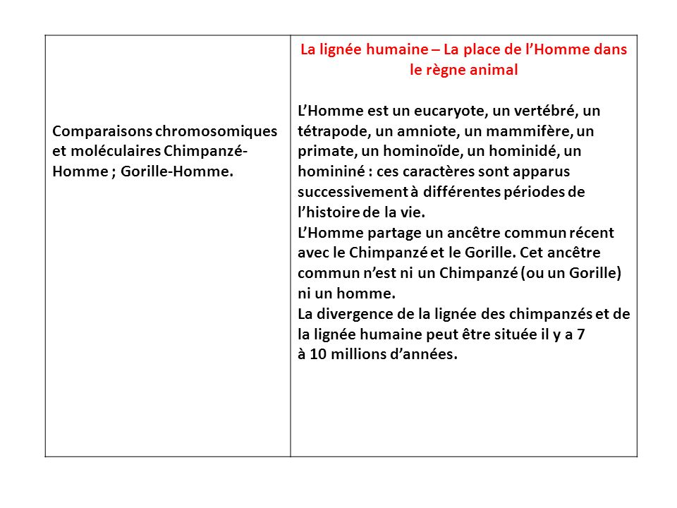 Comparaisons chromosomiques et moléculaires Chimpanzé- Homme ; Gorille-Homme. La lignée humaine – La place de lHomme dans le règne animal LHomme est u